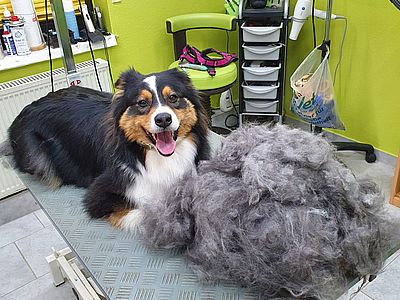 Fell-Issimo-Border-Collie