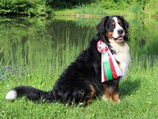 fell-issimo-berner-sennenhund
