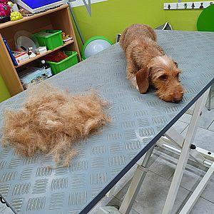 fell-issimo-trimmen-Border-Terrier-ok